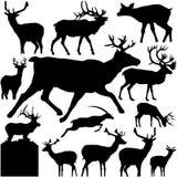 vectoral detaljerade silhouettes för hjortar Royaltyfria Bilder