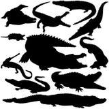vectoral detaljerade silhouettes för krokodil Fotografering för Bildbyråer