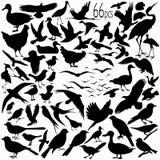 vectoral detaljerade silhouettes för fågel Arkivbild