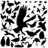vectoral detaljerade silhouettes för fågel Royaltyfri Bild