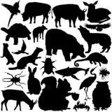 vectoral wild för djura detaljerade silhouettes Arkivfoto