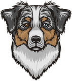 VectorAustralian Shepherd Dog Royalty Free Stock Photo