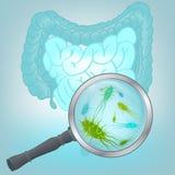 Vectorbacteriënflora Stock Afbeelding