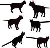 Vectorbeeld - het kattensilhouet in status stelt geïsoleerd op witte achtergrond Stock Fotografie
