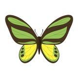 Vectorbeeld van de vlinder Stock Afbeelding