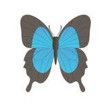 Vectorbeeld van de vlinder Royalty-vrije Stock Afbeeldingen
