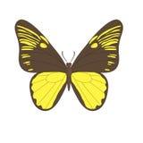 Vectorbeeld van de vlinder Stock Afbeeldingen