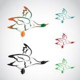 Vectorbeeld van een vliegende wilde eend Royalty-vrije Stock Foto's