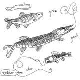 Vectorbeeld van zoetwatervissen Royalty-vrije Stock Foto