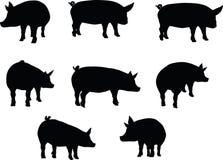 Vectorbeeld, varkenssilhouet, in een bevindende die positie, op witte achtergrond wordt geïsoleerd Stock Afbeelding