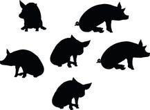 Vectorbeeld, varkenssilhouet, in een gezette die positie, op witte achtergrond wordt geïsoleerd Royalty-vrije Stock Fotografie