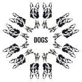 Vectorbeelden van honden De honden worden geschikt in een cirkel, op witte achtergrond wordt geïsoleerd die Stock Afbeelding