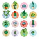 Vectorbeeldverhaalcactussen en succulente pictogramreeks Stock Fotografie