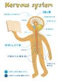 Vectorbeeldverhaalillustratie van menselijk zenuwstelsel voor jonge geitjes Stock Foto