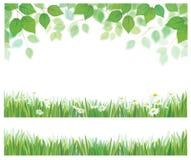 Vectorbladeren, gras en madeliefjegrenzen Stock Afbeelding
