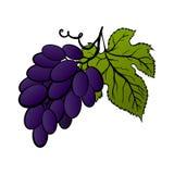 Vectorbossen van druiven Stock Foto's