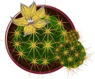 Vectorcactus met bloem Stock Afbeeldingen