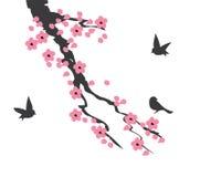 Vectorcherry blossom Stock Afbeelding