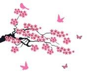Vectorcherry blossom Stock Foto's