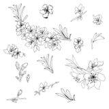 Vectorcontour van bloemen en amandeltakken Overzichtstekening stock illustratie