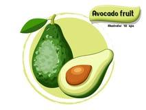 VectordieAvocadofruit op kleurenachtergrond wordt geïsoleerd, illustrator 10 eps Stock Foto