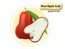 VectordieDjamboevruchtfruit op kleurenachtergrond wordt geïsoleerd, illustrator 10 eps Royalty-vrije Stock Foto