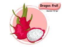 VectordieDraakfruit op kleurenachtergrond wordt geïsoleerd, illustrator 10 eps Royalty-vrije Stock Fotografie