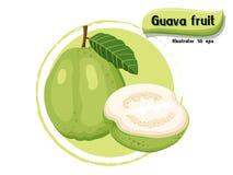 VectordieGuavefruit op kleurenachtergrond wordt geïsoleerd, illustrator 10 eps Royalty-vrije Stock Afbeeldingen