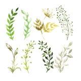 VectordieReeks bloemen in waterverf worden geschilderd royalty-vrije illustratie