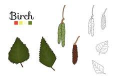 Vectordiereeks elementen van de berkboom op witte achtergrond worden ge?soleerd stock illustratie