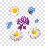 Vectordiereeks takken van lilac madeliefje en vergeet-mij-nietjebloemen op een witte achtergrond worden geïsoleerd vector illustratie