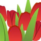 Vectordocument rode tulpen Royalty-vrije Stock Afbeelding
