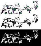 Vectordruiven kruipende wijnstok met druivenbessen, bladeren Wijnstok van violette en groene die kleuren, op zwart-wit wordt geïs royalty-vrije stock foto's