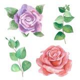 Vectores del watercolour de las rosas Foto de archivo libre de regalías