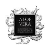 Vectorhand getrokken botanisch Aloë Vera vector illustratie