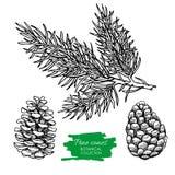 Vectorhand getrokken botanische Denneappel en tak Royalty-vrije Stock Foto's