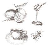 Vectorhand getrokken citroen, honingslepel, koffiekop, bij schets die gezonde voedselinzameling trekken royalty-vrije illustratie