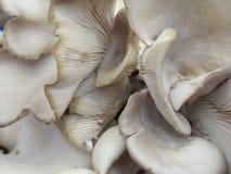 Vectorhand getrokken illustratie Achtergrond van oesterpaddestoelen Royalty-vrije Stock Foto
