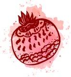 Vectorhand getrokken waterverf het schilderen fruitgranaat Royalty-vrije Stock Afbeelding