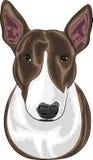 Vectorhondras Bull terrier Royalty-vrije Stock Foto