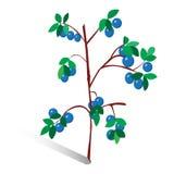 Vectorillustratie, getrokken twijg van bosbessen Royalty-vrije Stock Afbeelding
