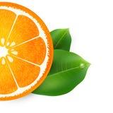 Vectorillustratie met sinaasappel Stock Afbeeldingen