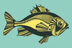 Vectorillustratie met vissen, oceaan Royalty-vrije Stock Foto