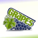 Vectorillustratie op het thema van druiven Stock Fotografie