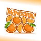 Vectorillustratie op het thema van mandarin Royalty-vrije Stock Afbeelding