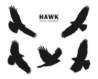 Vectorillustratie: Reeks Silhouetten van vliegende die Havik op witte achtergrond wordt geïsoleerd Zwarte adelaars Royalty-vrije Stock Afbeelding