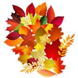 Vectorillustratie van de bladerenboeket van de kleurenherfst op witte rug Stock Afbeelding