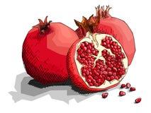 Vectorillustratie van de granaatappels van het tekeningsfruit stock illustratie