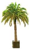 Vectorillustratie van de palm Stock Fotografie