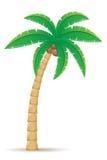 Vectorillustratie van de palm de tropische boom Stock Afbeeldingen